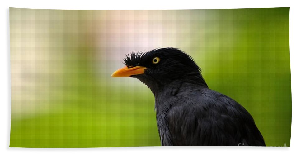 Myna Hand Towel featuring the photograph White Vented Myna Bird With Feathers Standing Above Beak by Imran Ahmed