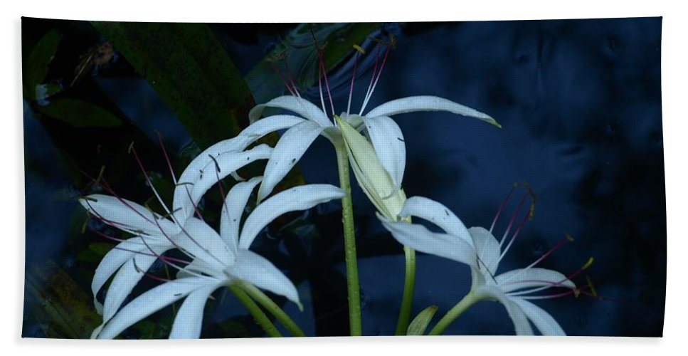 White Hand Towel featuring the photograph White Water Flower by Jo Jurkiewicz