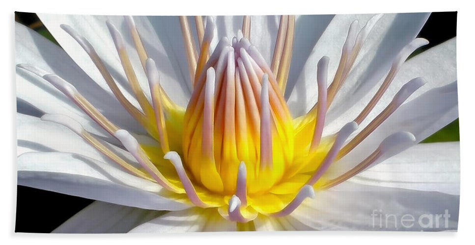 Photography Hand Towel featuring the photograph White Waterlily by Kaye Menner