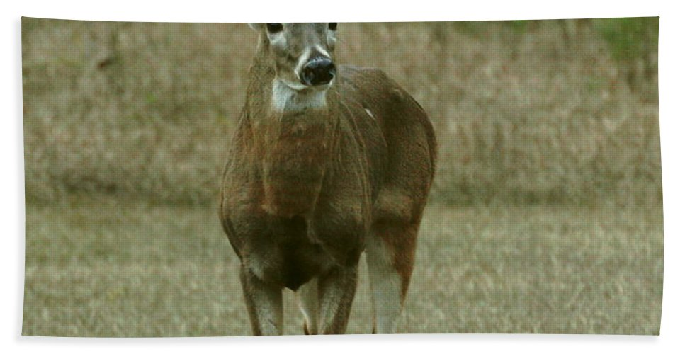 Deer Hand Towel featuring the photograph Whitetail Buck by Myrna Bradshaw