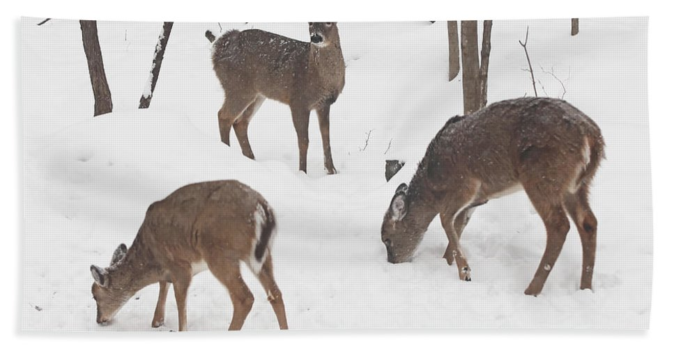 Deer Hand Towel featuring the photograph Whitetail Deer In Snowy Woods by Mother Nature