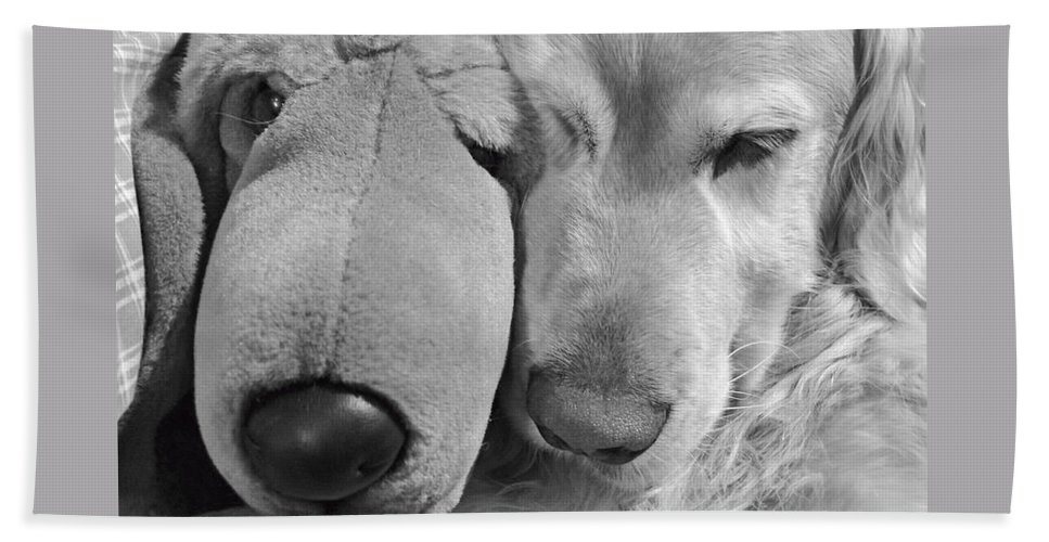 Golden Retriever Bath Sheet featuring the photograph Who Has The Biggest Nose Golden Retriever Dog by Jennie Marie Schell
