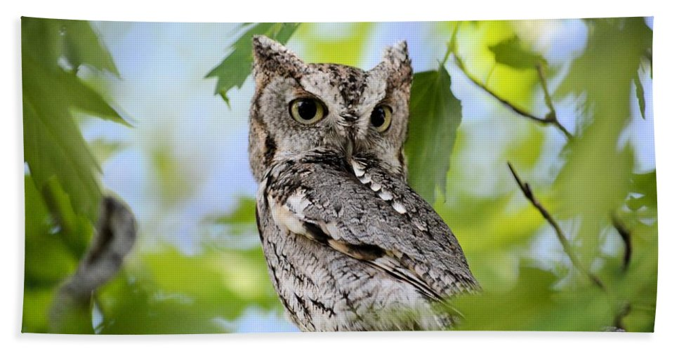 Owl Hand Towel featuring the photograph Who Was That by Bonfire Photography