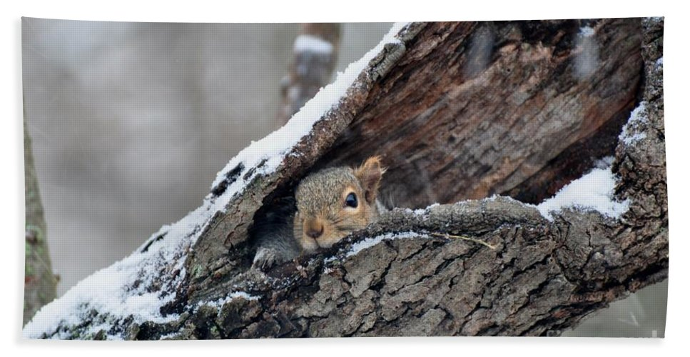 Squirrel Hand Towel featuring the photograph Who You Looking At by Juanita Doll