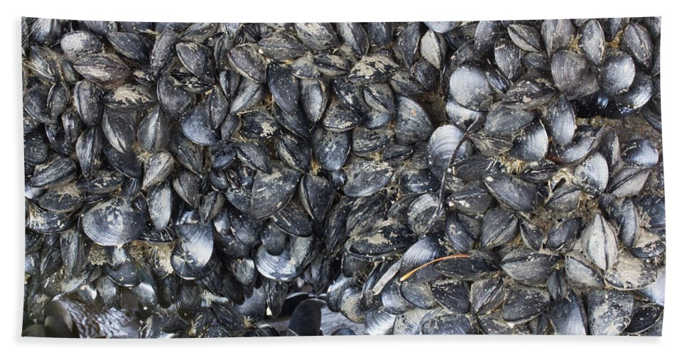 Abstract Hand Towel featuring the photograph Whole Lotta Clams by Heidi Smith