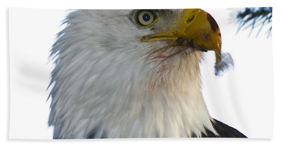 Bald Eagle Bath Sheet featuring the photograph Who's Nexted ? by Rob Mclean