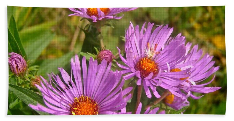 Flowers Bath Sheet featuring the photograph Wild Asters by Stephanie Moore