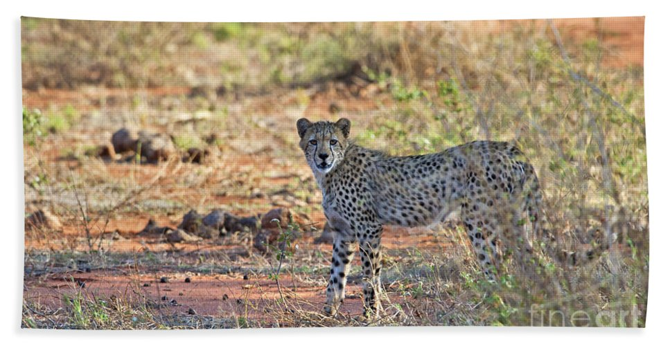 Festblues Hand Towel featuring the photograph Wild Beauty... by Nina Stavlund