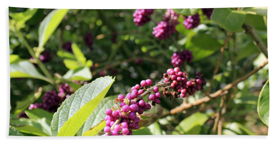 Beauty Berry Bath Sheet featuring the photograph Wild Beautyberry Bush by Lee Serenethos
