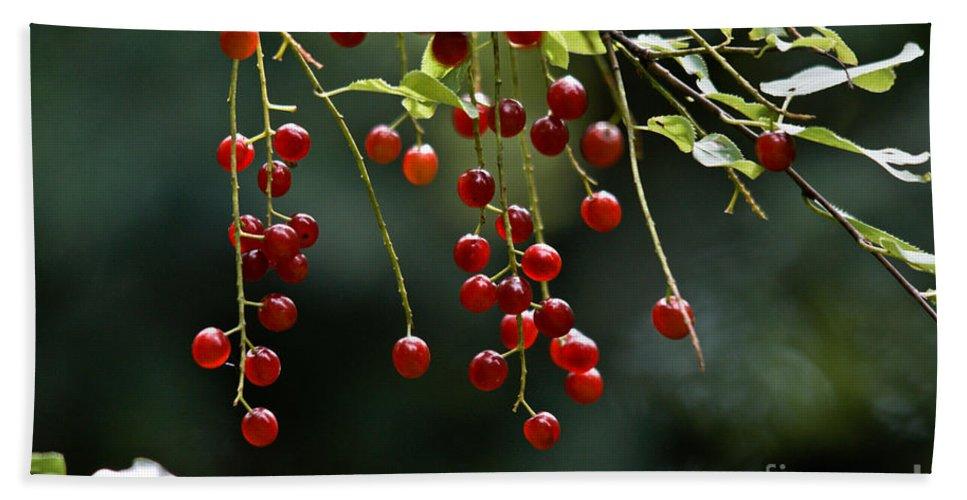 Chokecherries Hand Towel featuring the photograph Wild Berries by Cheryl Baxter