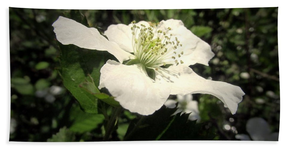 Berry Hand Towel featuring the photograph Wild Blackberry Blossom by Joyce Dickens