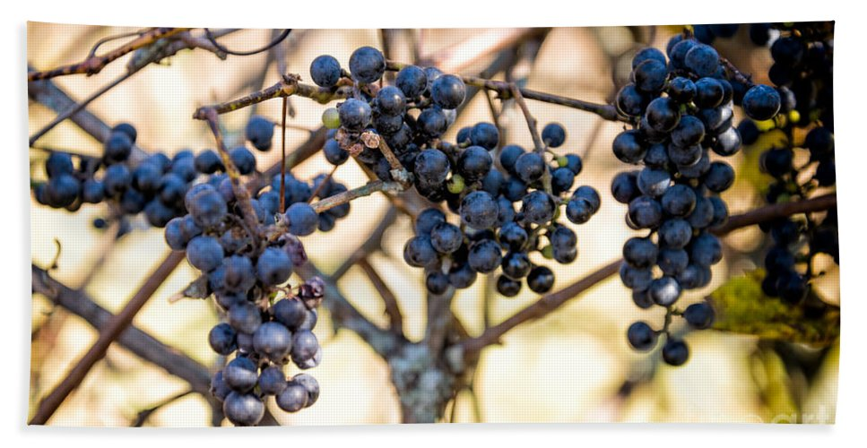Wild Bath Sheet featuring the photograph Wild Blue Grapes by Les Palenik
