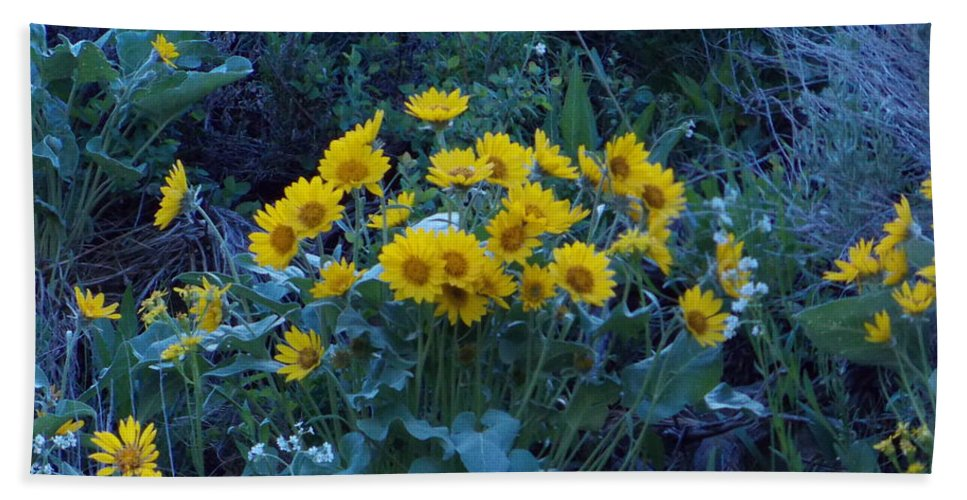Wild Daisies Hand Towel featuring the photograph Wild Daisies by Jennifer Allen