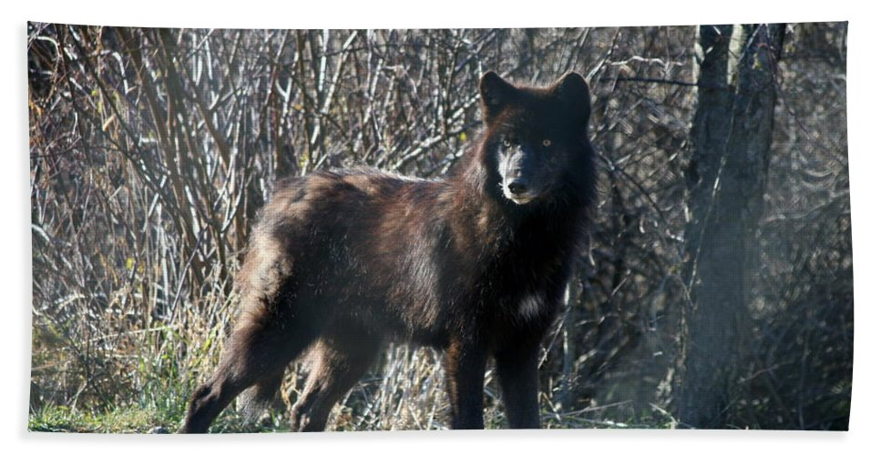 Wolf Bath Sheet featuring the photograph Wild Eyes by Neal Eslinger