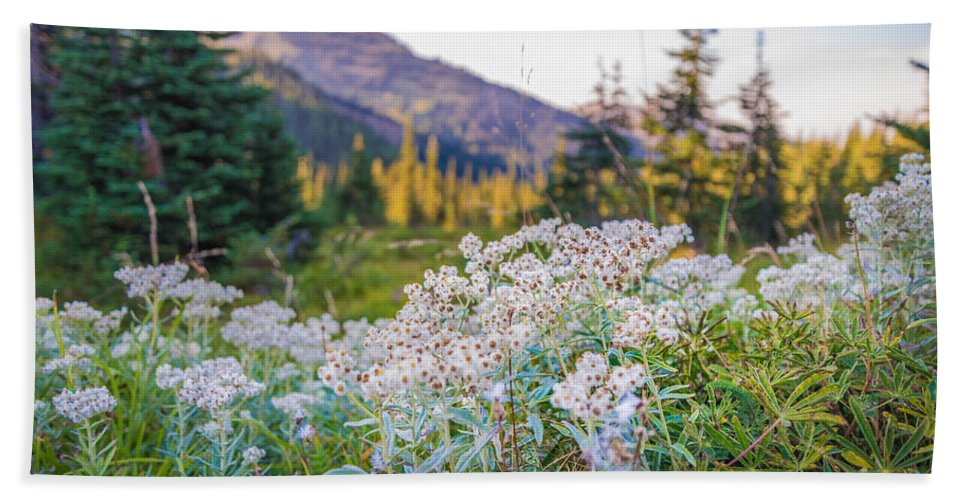 Olympic National Park Hand Towel featuring the photograph Wild Flowers by Kristopher Schoenleber