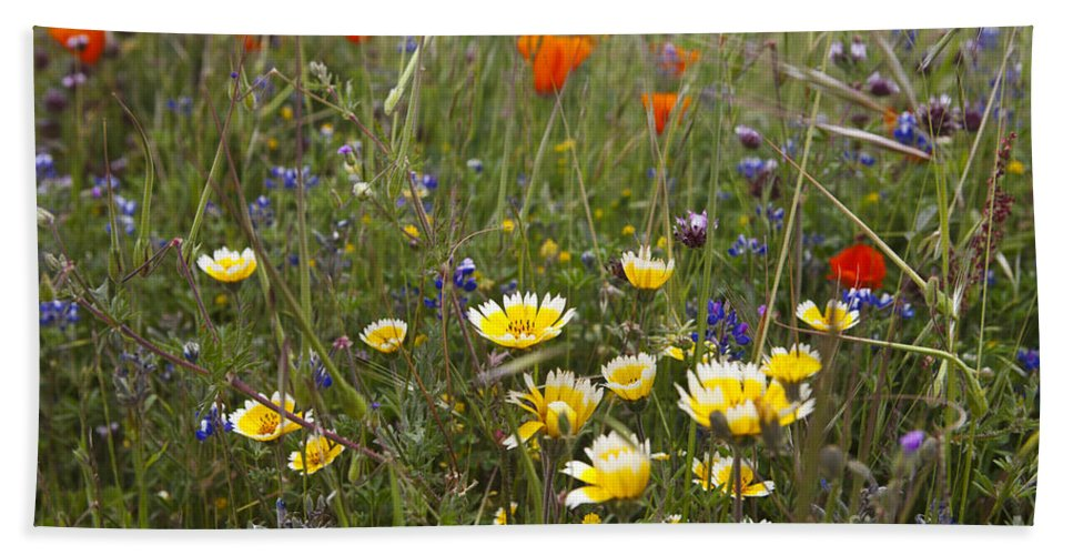 Russian Ridge Open Space Hand Towel featuring the photograph Wild Flowers Russian Ridge by Jason O Watson