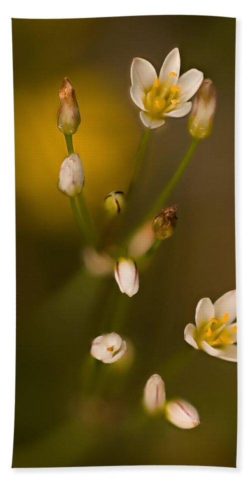 2012 Bath Sheet featuring the photograph Wild Garlic by Robert Charity