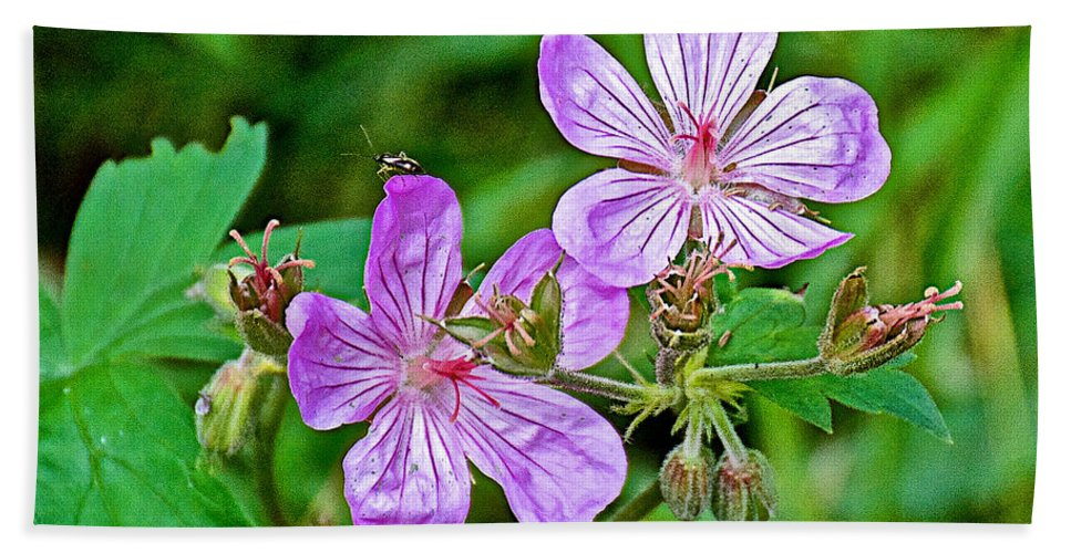 Wild Geranium On Trail To Swan Lake In Grand Teton National Park Hand Towel featuring the photograph Wild Geranium On Trail To Swan Lake In Grand Teton National Park-wyoming by Ruth Hager