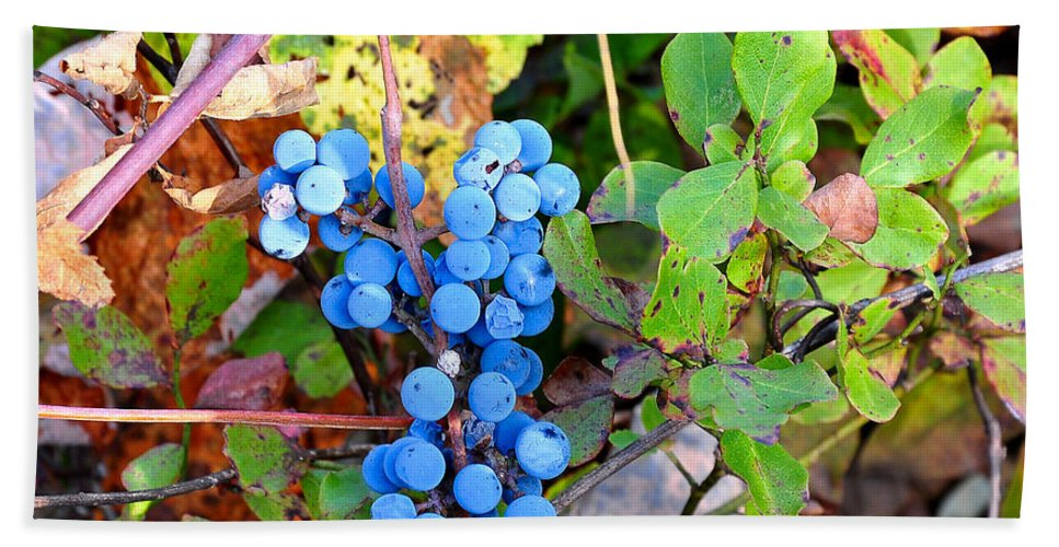 Fox Grapes Hand Towel featuring the photograph Wild Grapes by Todd Hostetter