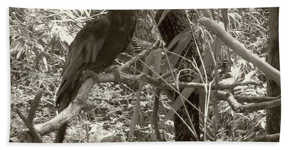 Wild Bath Sheet featuring the photograph Wild Hawaiian Parrot Sepia by Joseph Baril