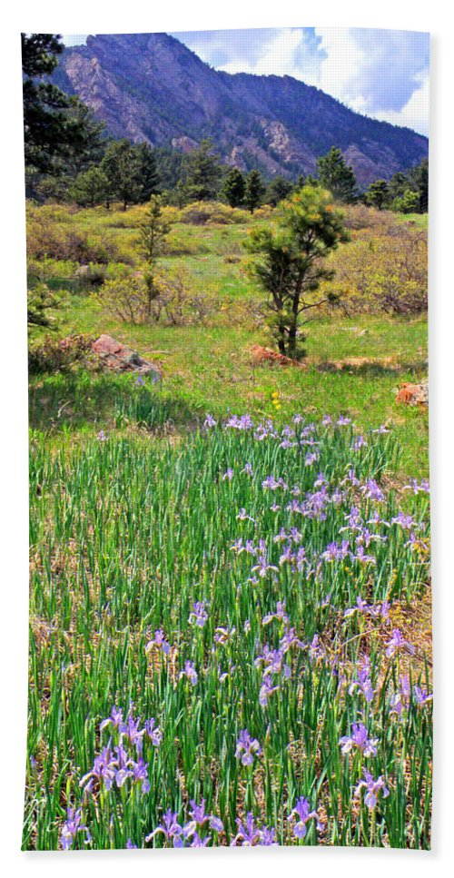Wild Flowers Irises Mesa Trail Boulder Colorado Flatirons Rockymountains Flowerfields Nature Hand Towel featuring the photograph Wild Irises by George Tuffy