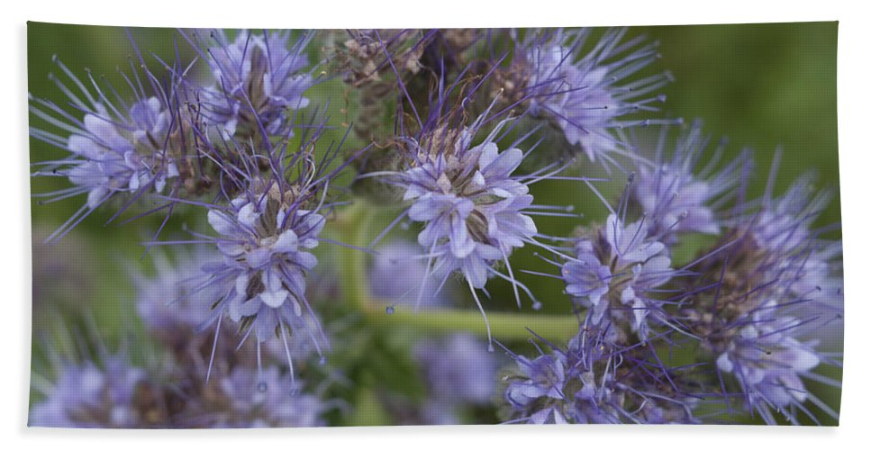 Flower Bath Sheet featuring the photograph Wild Lavender by Miguel Winterpacht