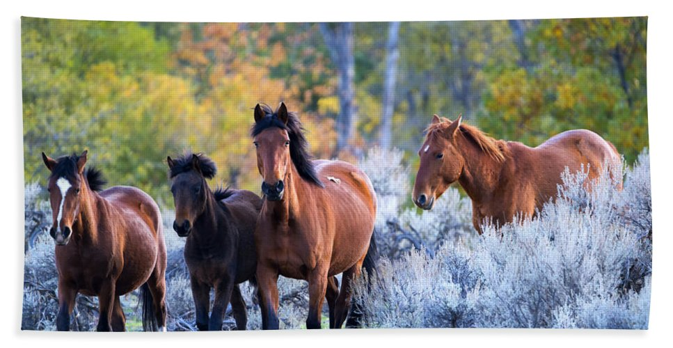 Mustangs Hand Towel featuring the photograph Wild Mustang Autumn by Mike Dawson