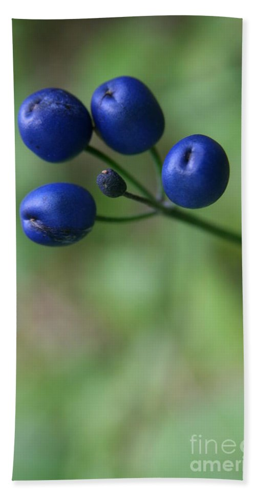 Bluebead Lily Bath Sheet featuring the photograph Wild New Hampshire Bluebead Lily by Neal Eslinger