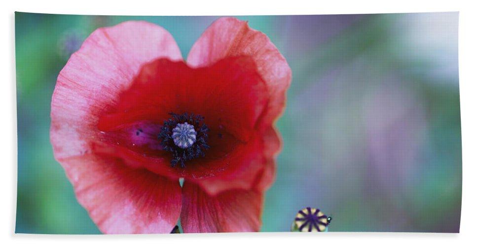 Poppy Hand Towel featuring the photograph Wild Poppy by Eti Reid
