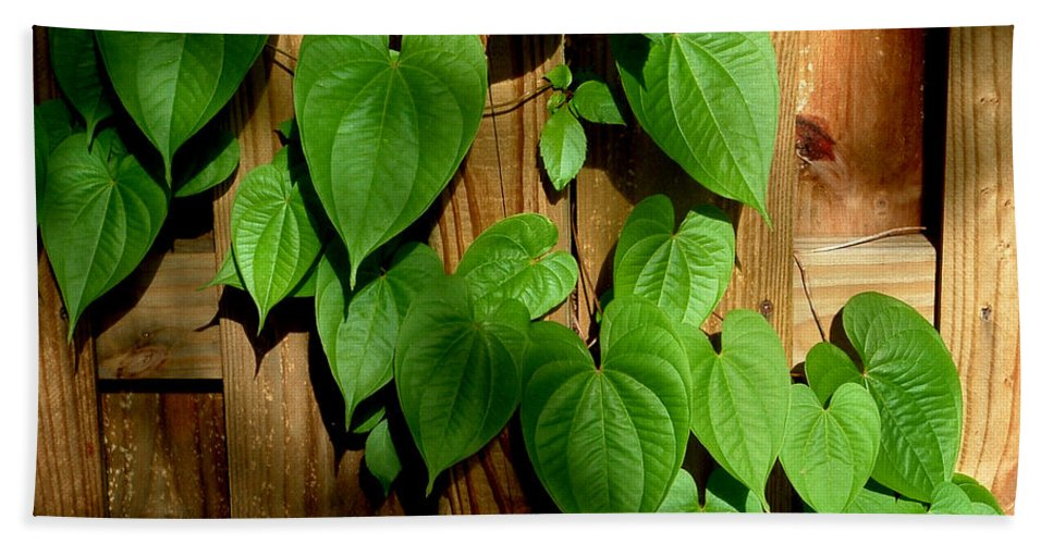 Leaf Hand Towel featuring the photograph Wild Potato Vine 2 by David Weeks