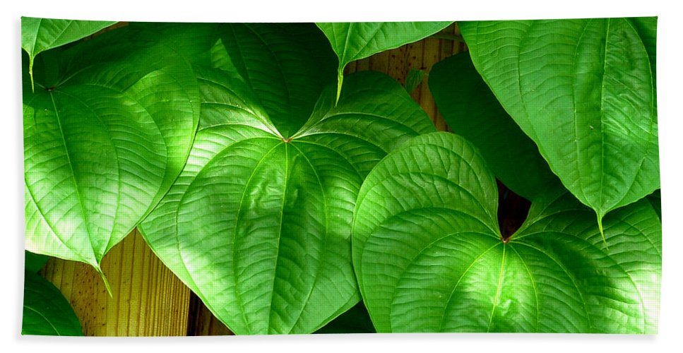 Leaf Bath Sheet featuring the photograph Wild Potato Vine by David Weeks