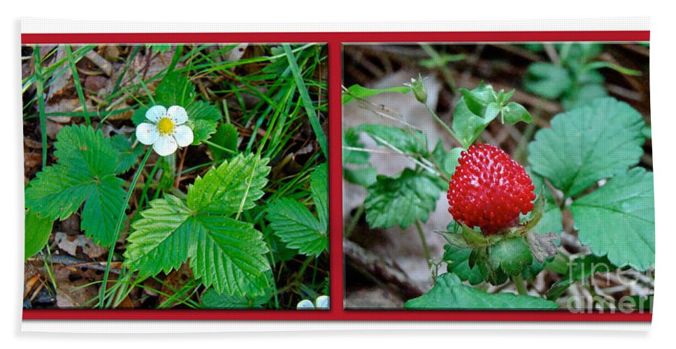 Strawberry Hand Towel featuring the photograph Wild Strawberry Plant - Fragaria Virginiana by Mother Nature