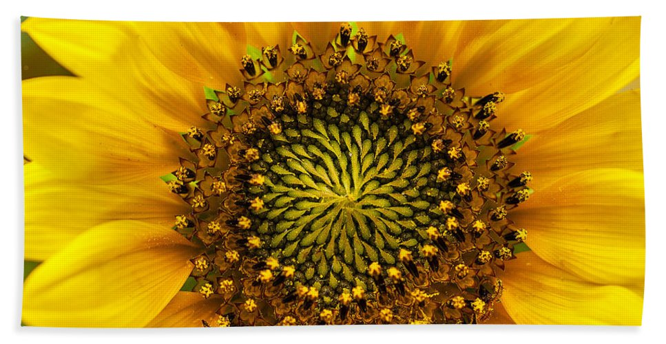 Wild Sunflower Photograph Hand Towel featuring the photograph Wild Sunflower by Mae Wertz