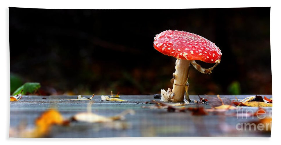 Autumn Hand Towel featuring the photograph Wild Toadstool by Simon Bratt Photography LRPS