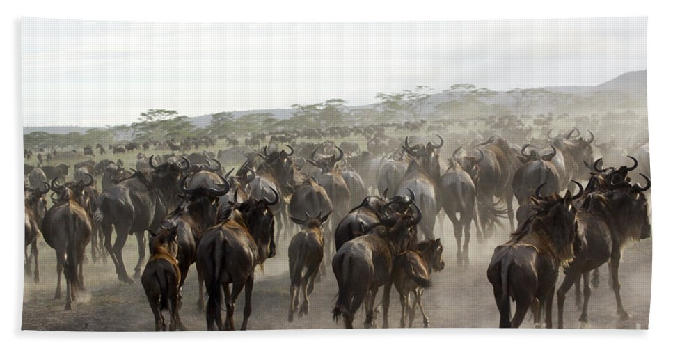 Migrating Hand Towel featuring the photograph Wildebeest Migration by Gilad Flesch