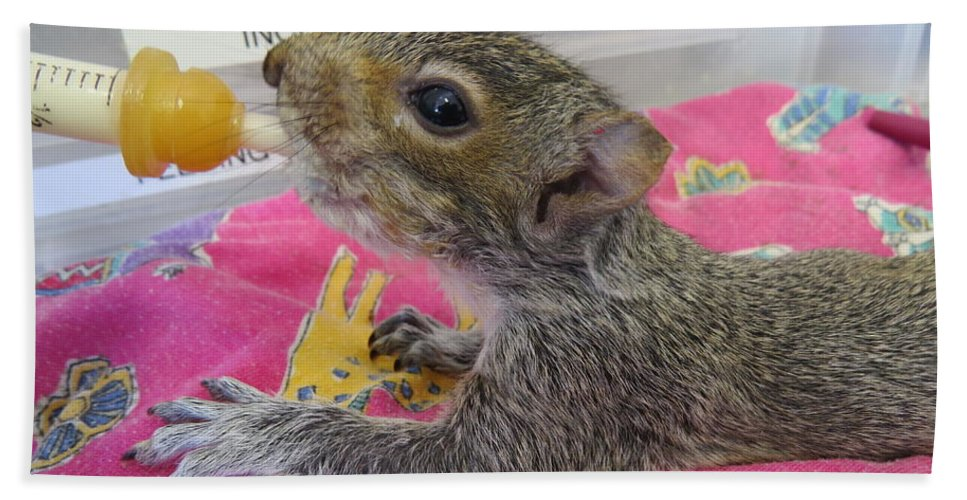 Squirrel Bath Sheet featuring the photograph Wildlife Rehabilitation by Art Dingo