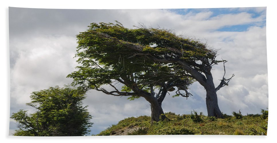 Sky Hand Towel featuring the photograph Wind-bent Trees In Tierra Del Fuego by Ralf Broskvar