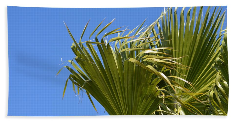 Palm Hand Towel featuring the photograph Wind In The Palm by Linda Kerkau