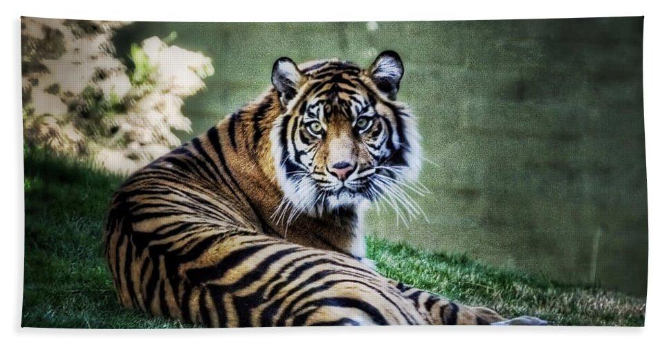 Sumatran Tiger Bath Towel featuring the photograph Windows To My Soul by Saija Lehtonen