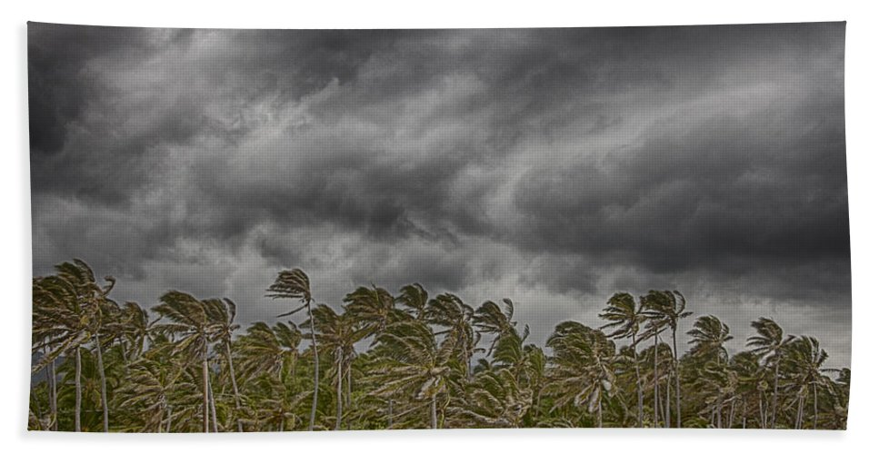 Palm Trees Bath Sheet featuring the photograph Windswept V3 by Douglas Barnard