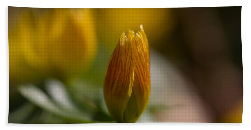 Winter Aconite Hand Towel featuring the photograph Winter Aconite by Andreas Levi