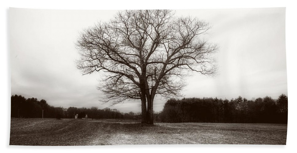 Trees Hand Towel featuring the photograph Winter Bare by David Stone