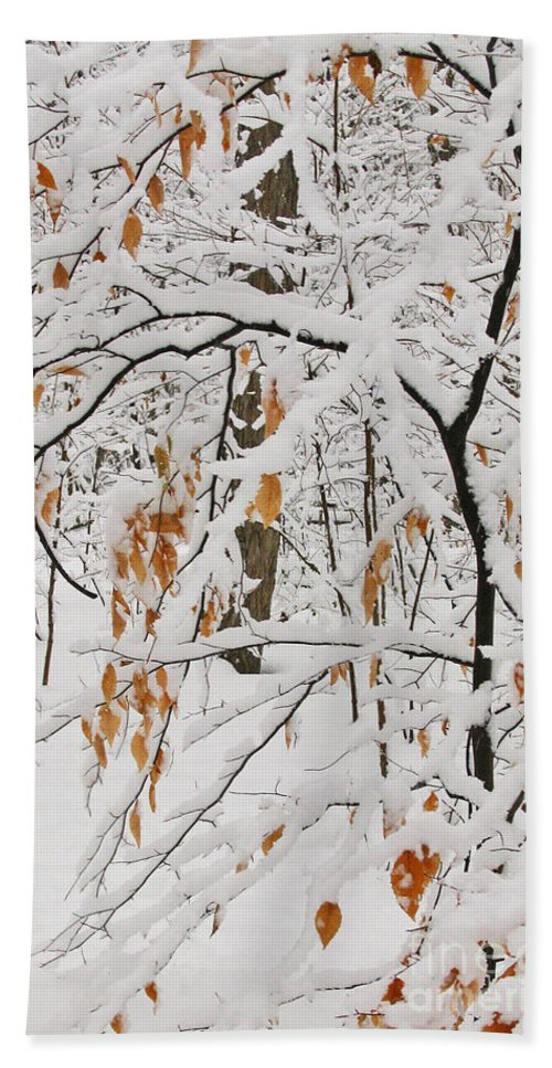 Winter Bath Towel featuring the photograph Winter Branches by Ann Horn