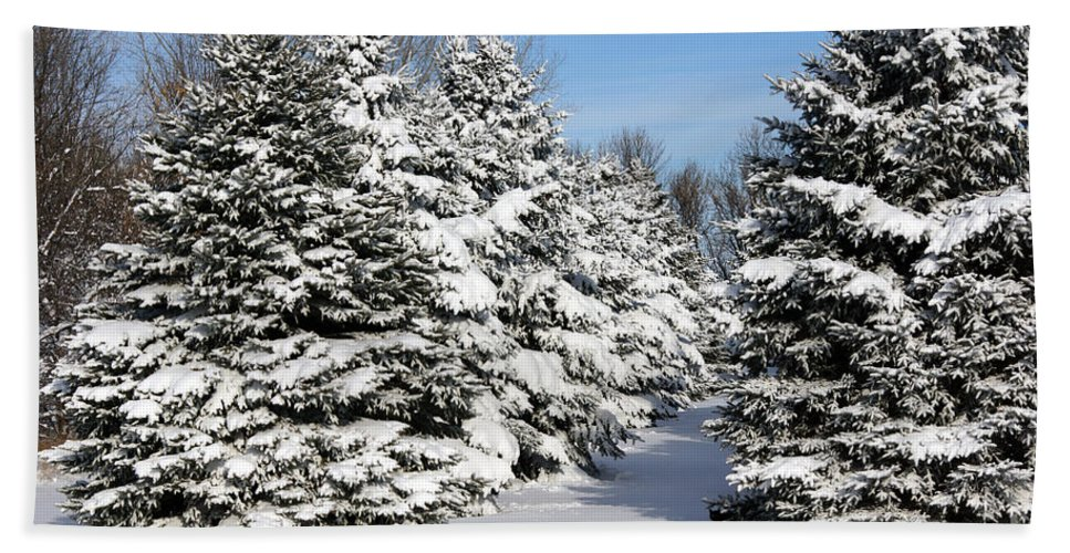 Trees Hand Towel featuring the photograph Winter In The Pines by Lori Tordsen