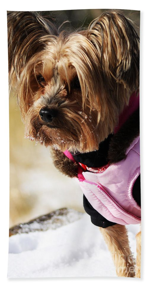 Dog Bath Sheet featuring the photograph Winter Jacket by Alyce Taylor