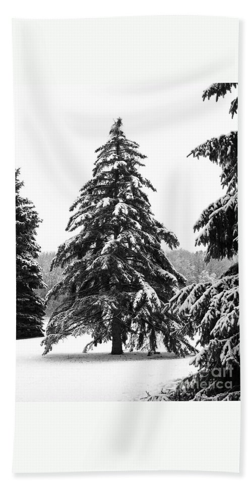 Winter Bath Towel featuring the photograph Winter Pines by Ann Horn