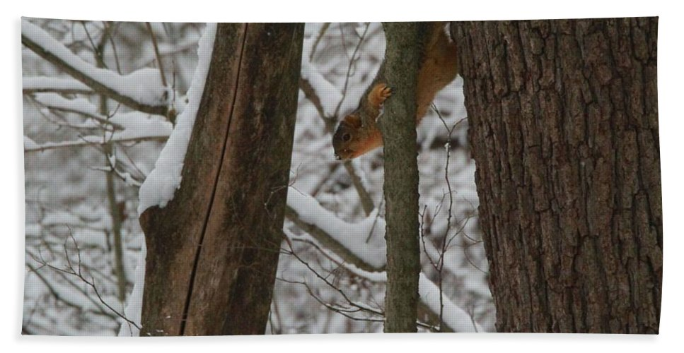 Winter Squirrel Hand Towel featuring the photograph Winter Squirrel by Dan Sproul