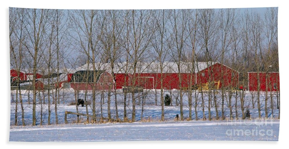 Winter Hand Towel featuring the photograph Winter Tree Line by Ann Horn