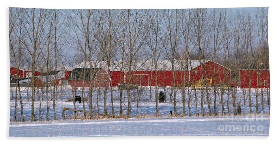 Winter Bath Sheet featuring the photograph Winter Tree Line by Ann Horn
