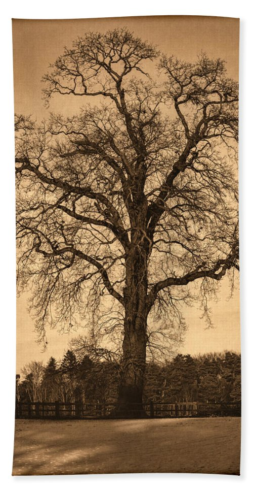 Black Bath Sheet featuring the photograph Winter Tree - Old by Nick Field